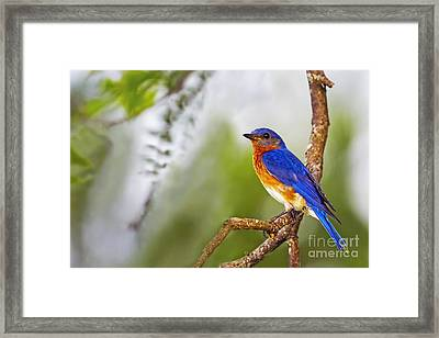 Blue In Green Framed Print