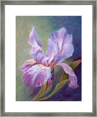 Blue Indigo Iris Framed Print by Irene Hurdle