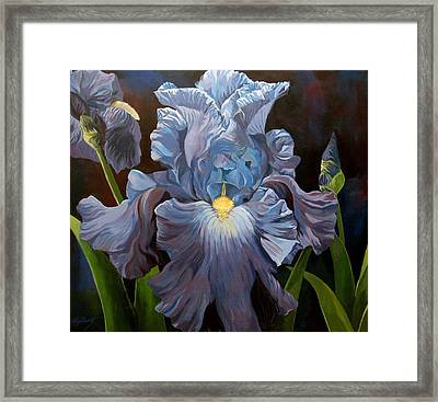 Blue Iris Framed Print by Alfred Ng