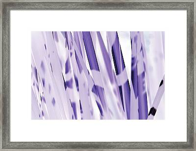 Blue Iris Framed Print by Eiwy Ahlund