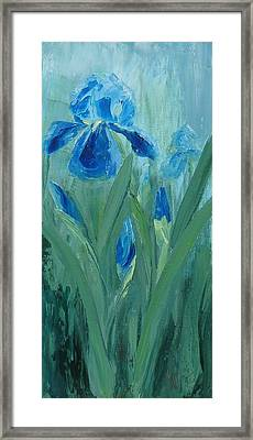 Blue Iris Framed Print by Mary Rogers