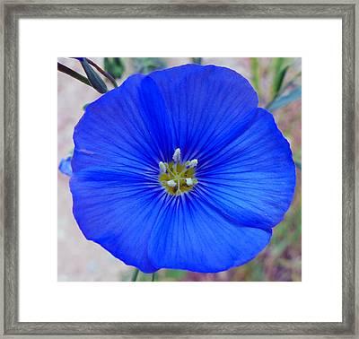 Blue Is Blue Framed Print