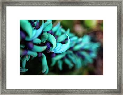 Blue Jade Plant With Purple Flowers Framed Print