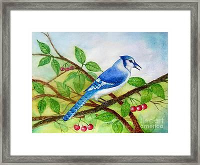 Blue Jay Framed Print by Anjali Vaidya