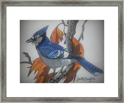 Blue Jay At Fall Framed Print