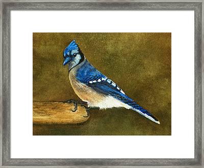 Blue Jay Framed Print by Nan Wright