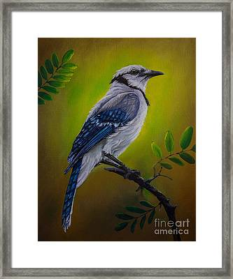 Blue Jay Painting Framed Print