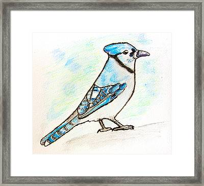 Blue Jay Framed Print by Pati Photography