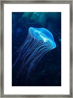 Blue Jelly Framed Print