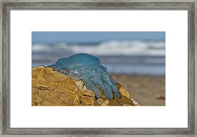 Blue Jellyfish 02 Framed Print