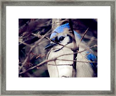 Framed Print featuring the photograph Blue Joy by Zinvolle Art