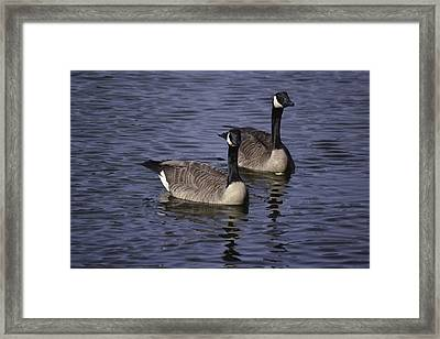 Blue Lake Geese Framed Print