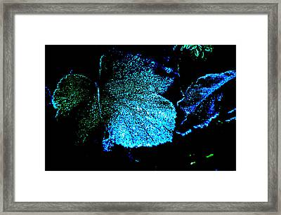Blue Leaf Framed Print by Randi Grace Nilsberg