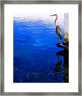 Blue Ledge Framed Print by Christy Usilton