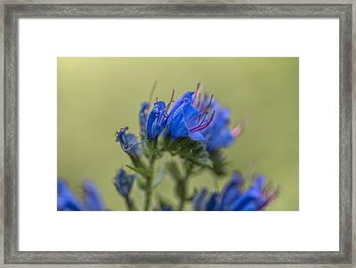 Framed Print featuring the photograph Blue by Leif Sohlman