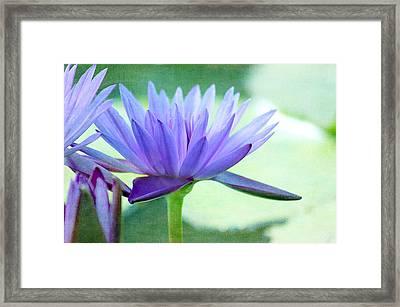 Blue Lily Framed Print