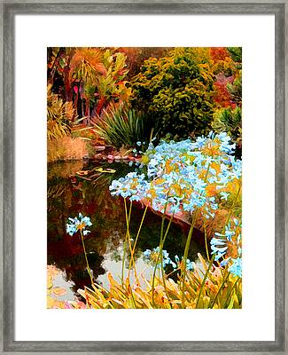 Blue Lily Water Garden Framed Print by Amy Vangsgard