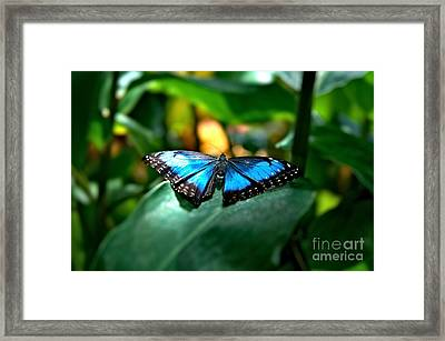 Blue Lit Butterfly Framed Print