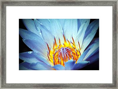 Blue Lotus Framed Print