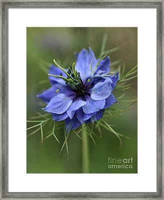 Framed Print featuring the photograph Blue Love by Joy Watson