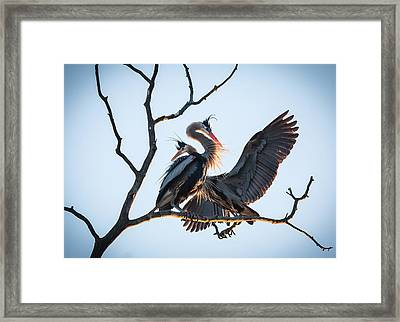 Blue Love Framed Print