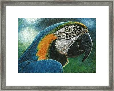 Blue Macaw Framed Print by Sandra LaFaut
