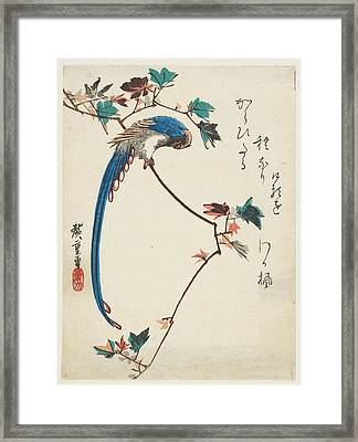 Blue Magpie On Maple Branch Framed Print