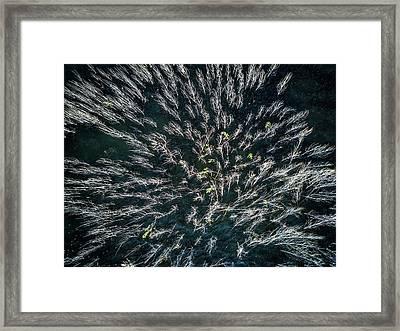 Blue Mangrove Framed Print