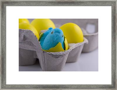 Blue Marshmallow Chick Hatched In Egg Carton Framed Print