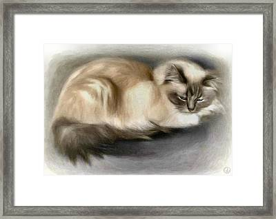 Blue Masked Birman Framed Print by Gun Legler