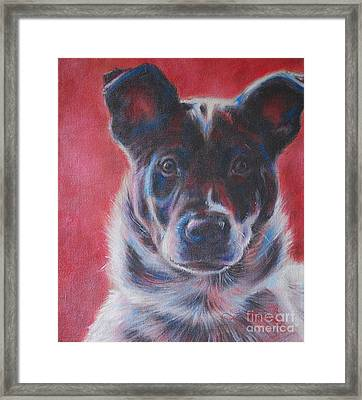 Blue Merle On Red Framed Print by Kimberly Santini
