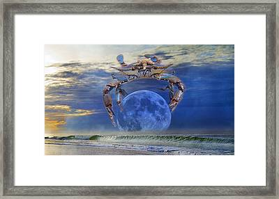 Blue Moon Crab Framed Print by Betsy Knapp