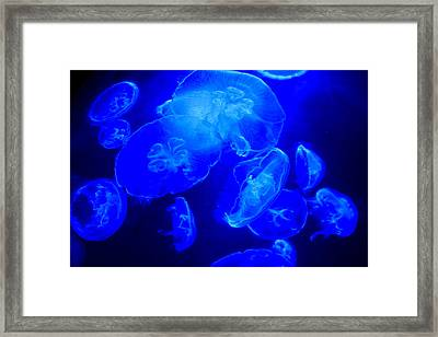 Blue Moon Jellies Framed Print