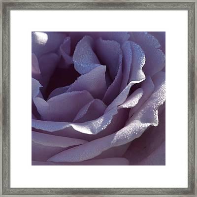 Blue Moon Rose 1.1 Framed Print by Cheryl Miller