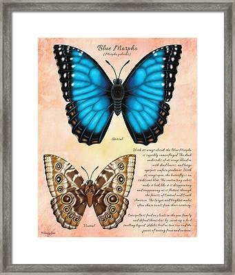 Blue Morpho Butterfly Framed Print by Tammy Yee