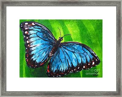 Blue Morpho Butterfly Framed Print by Zaira Dzhaubaeva