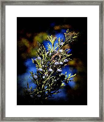 Blue Nature Framed Print by Milena Ilieva