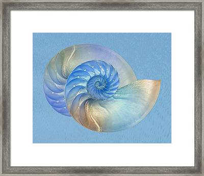 Blue Nautilus Pair - Horizontal Framed Print by Gill Billington