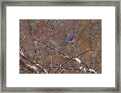 Framed Print featuring the photograph Blue Norther by Gary Holmes