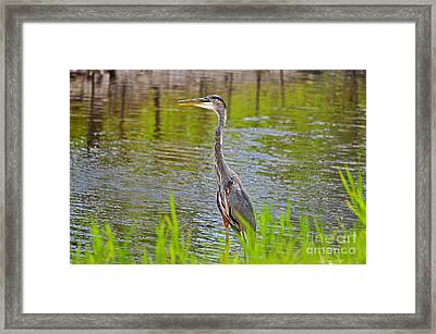 Blue On The Bank Framed Print