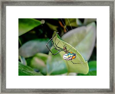 Framed Print featuring the photograph Blue Orbweaver by TK Goforth