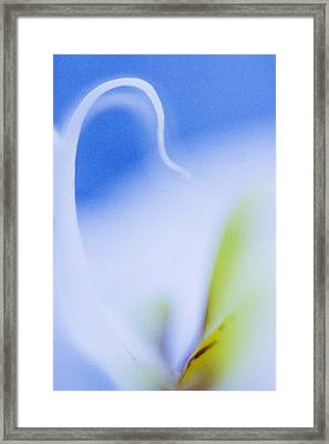 Blue Orchid Abstract Framed Print by Bradley R Youngberg