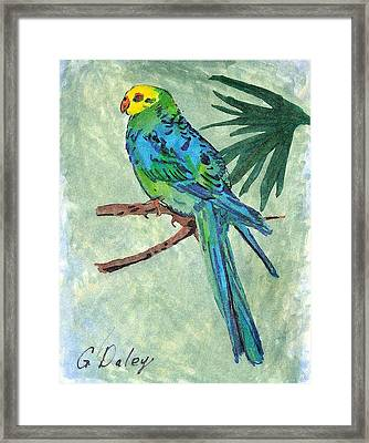 Blue Parakeet Framed Print by Gail Daley