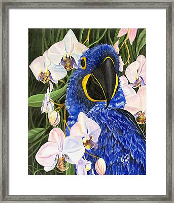 Blue Parrot  Framed Print by Michelle Kelly