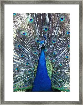 Blue Pearl Of Nature Framed Print