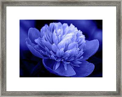 Blue Peony Framed Print by Sandy Keeton