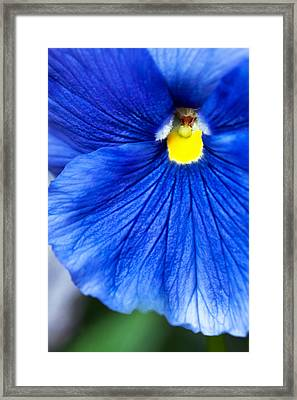 Framed Print featuring the photograph Blue Petal by Crystal Hoeveler