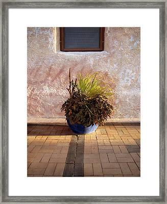 Blue Planter Morning Sun Framed Print by Ann Powell