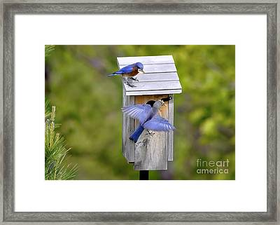 Framed Print featuring the photograph Blue Plate Special by Nava Thompson