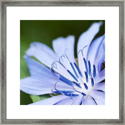 Blue Poetry.. Framed Print by Nina Stavlund